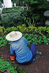 Gardeners in Lowton