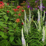 Garden Designers in Warrington