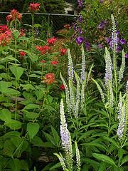 gardeners in Eccles