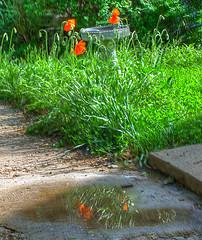 Garden drainage specialist in Lymm